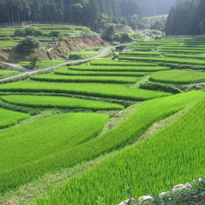 """自然との調和を大切にする日本の暮らしのルーツ""""棚田"""""""